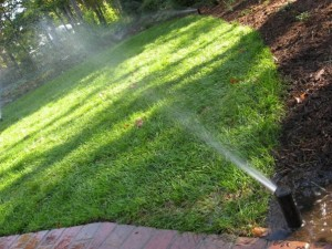 lawn and sprinkler head - image